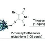 Protein Modification, Bioconjugation and Disulfide Bridging using Bromomaleimides