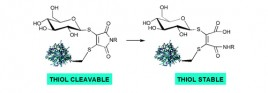 Tunable reagents for multi-functional bioconjugation